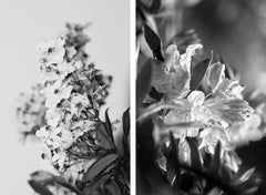 Power to the Flower Black N White Diptych #1