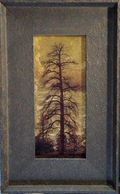 Dead Pine, Show Low, White Mountains, Az
