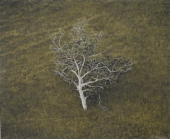 Eucalyptus Tree, Hillside, South Australia