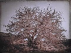 Juniper Tree, Monument Valley, Utah