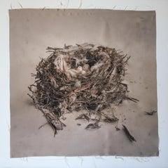 Nest 32