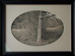 Oak Tree with Brush, Plum Creek, Texas