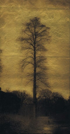 Single Tree (by lake) Kew Gardens