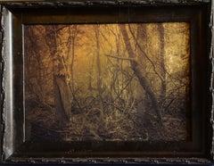 Swamp, Virginia Creeper, Plum Creek, Texas
