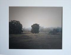 Tree in the Mist, Plum Creek, Tx