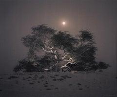 Tree of Life, Mesquite, Full Moon Rising, Bahrain