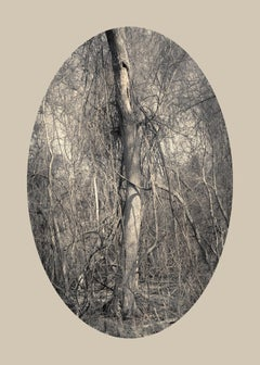 Tree with Vines, Plum Creek, Texas