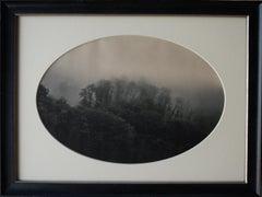 Trees in Mist, Bennablio, Italo