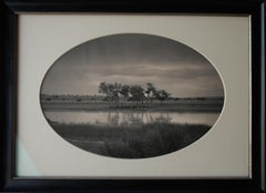 Trees, Pond, New Mexico