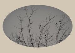 Twenty-Two Birds, New Mexico