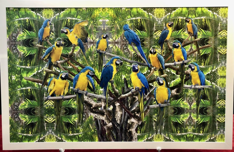 Parrot Tree Conceptual Photography For Sale 1