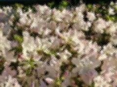 A Sense of Spring 1/1