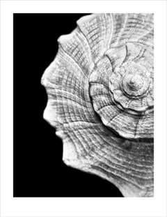 B/W (From the Whelks Series)