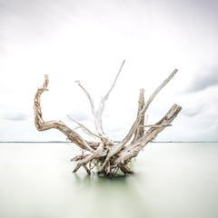 Driftwood at Harbour Island 60x60