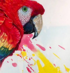 Coccinea -vibrant yellow and red illustrative parrot painting acrylic on canvas