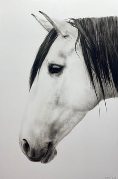 """""""Destiny"""" black and white oil painting of a white horse's profile"""
