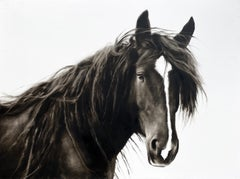 """Meant to Be"" photorealist black and white oil painting, a portrait of a horse"