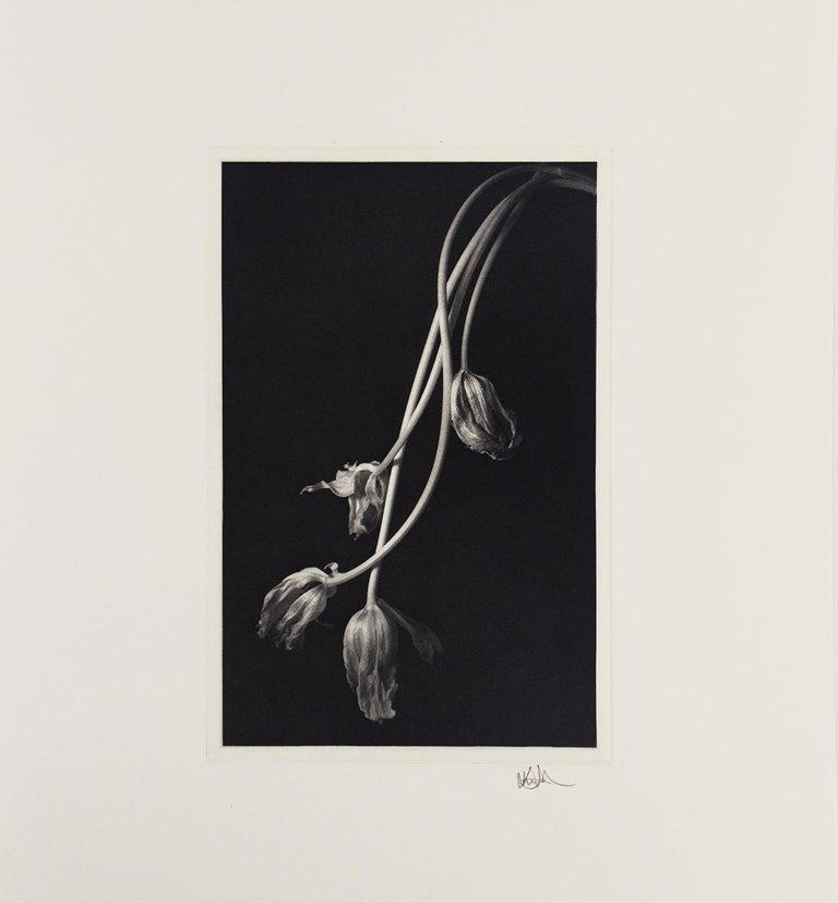 Still Life 678 - Contemporary Photograph by Kenro Izu