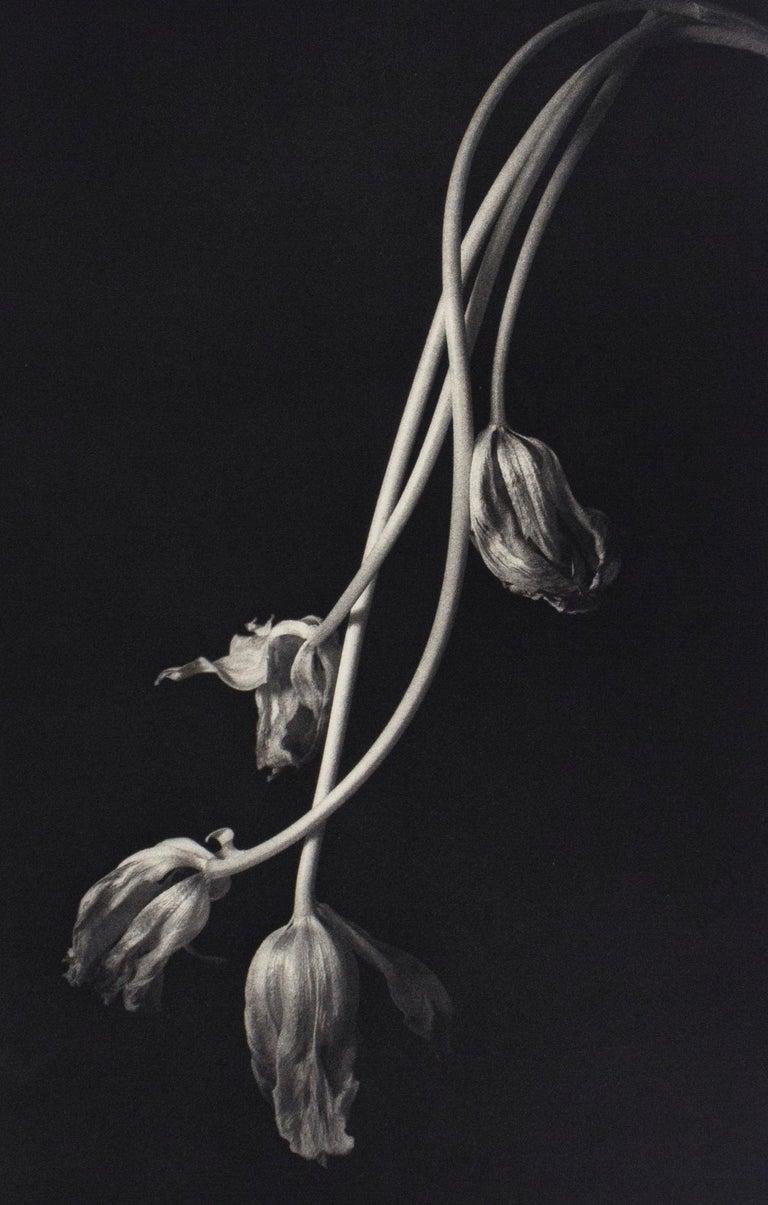 Still Life 678 - Photograph by Kenro Izu
