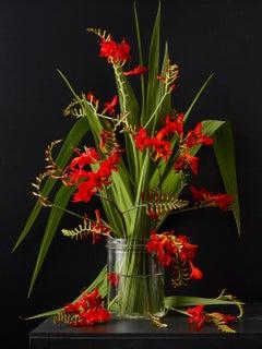 Crocosmia - Botanical photographic print, Old Masters Style, 21st century