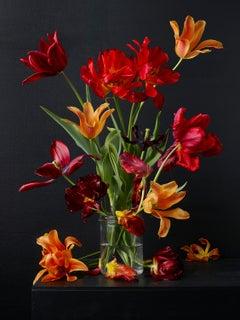Mixed Tulips #6,  Botanical photographic print,  Old Masters Style