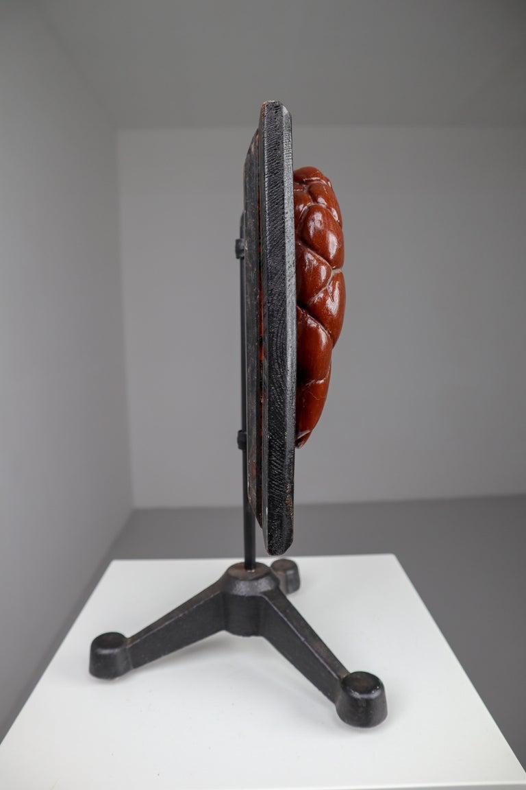 Kidneys Anatomical Model Wood and Plaster on Metal Base CZ, 1940s For Sale 3