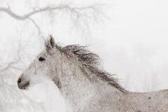 'Dashing', Wild Horses - Black & White Photography