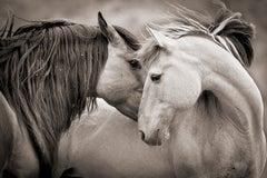 "'Embrace Beauty*', Wild Horses - Black & White Photography 24"" x 36"""