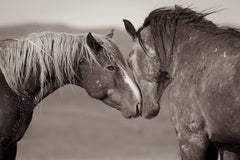 'Equus (Equal Us)*', Wild Horses - Black & White Photography