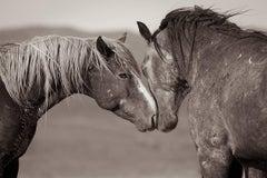 'Equus (Equal Us)', Wild Horses & Western Landscape Black & White Photography