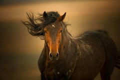 'Esperanza', Wild Horses - Black & White Photography