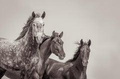 'Familia', Wild Horses & Western Landscape Black & White Photography