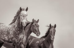 'Familia', Wild Horses -  Black & White Photography