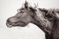 'Rockstar', Wild Horses & Western Landscape Black & White Photography