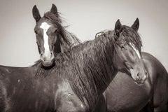 'Romeo and Juliet', Wild Horses - Black & White Photography