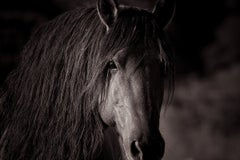 """""""Sacred,"""" Black and White Wild Horse Photograph, 36"""" x 54"""""""