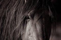 """'Sacred*', Wild Horses, Black & White Photography, 36"""" x 54"""""""