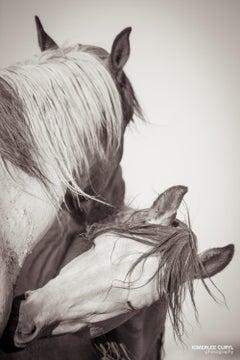 'Turtle Doves', Wild Horses & Western Landscape Black & White Photography