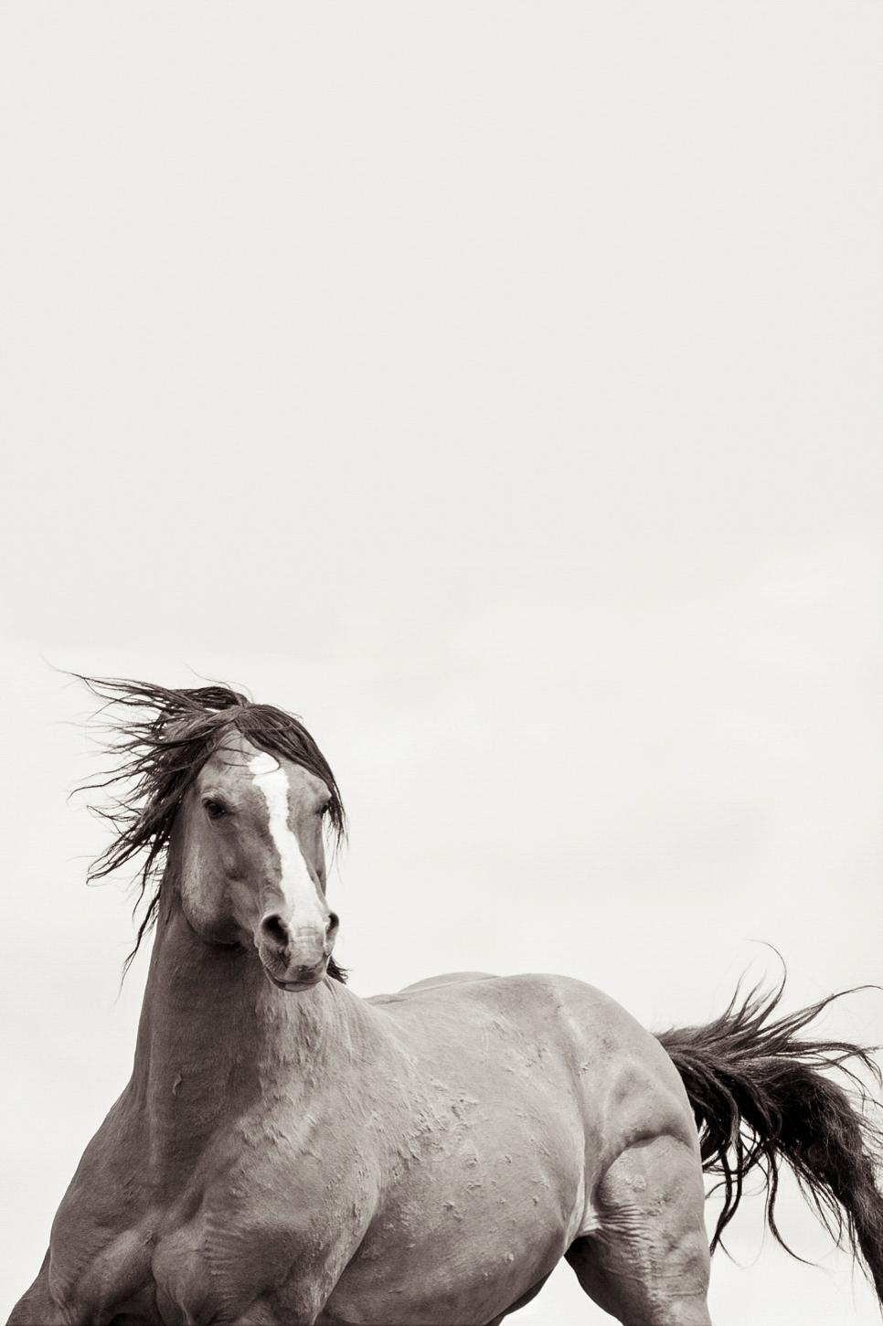 Kimerlee Curyl Valiant Wild Horses Black And White Photography For Sale At 1stdibs