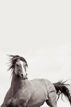 'Valiant', Wild Horses & Western Landscape Black & White Photography