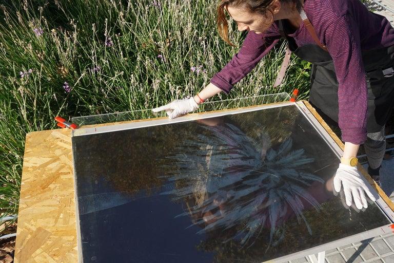 Botanical Triptych of Shady Majesty Palm Leaves Garden, Blue Tones Cyanotype  For Sale 7