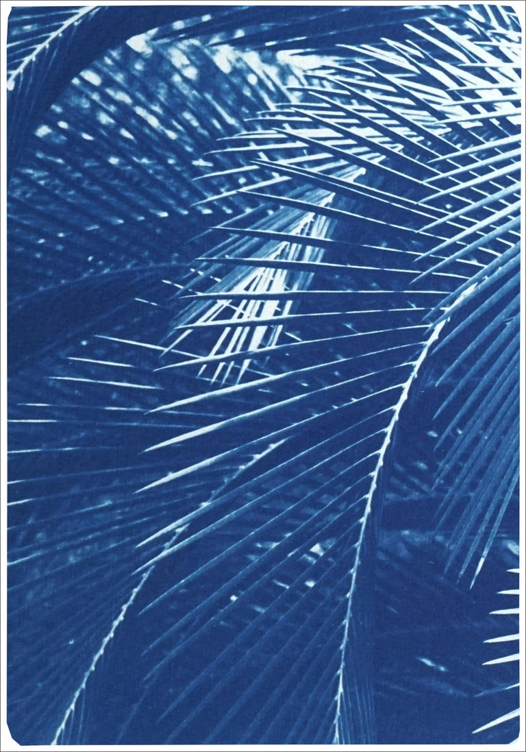 Botanical Triptych of Shady Majesty Palm Leaves Garden, Blue Tones Cyanotype  - Naturalistic Print by Kind of Cyan