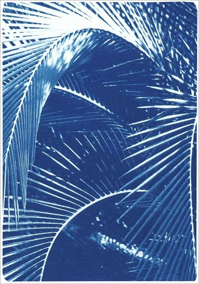 This is an exclusive handprinted limited edition cyanotype of a beautiful palm trees tropical garden.   Details: + Title: Shady Majesty Palm Leaves + Year: 2021 + Edition Size: 100 + Stamped and Certificate of Authenticity provided + Measurements :