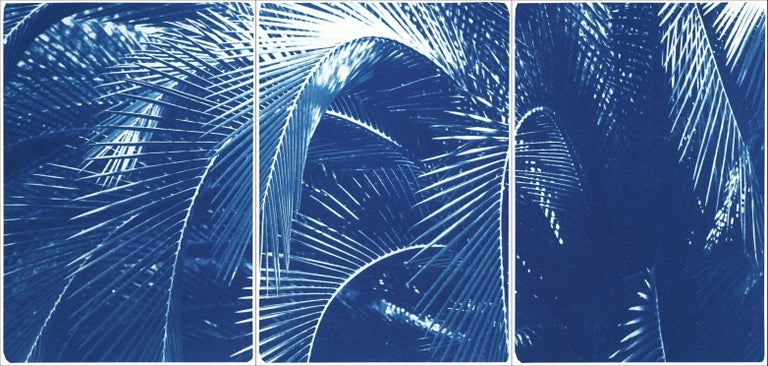 Kind of Cyan Landscape Print - Botanical Triptych of Shady Majesty Palm Leaves Garden, Blue Tones Cyanotype