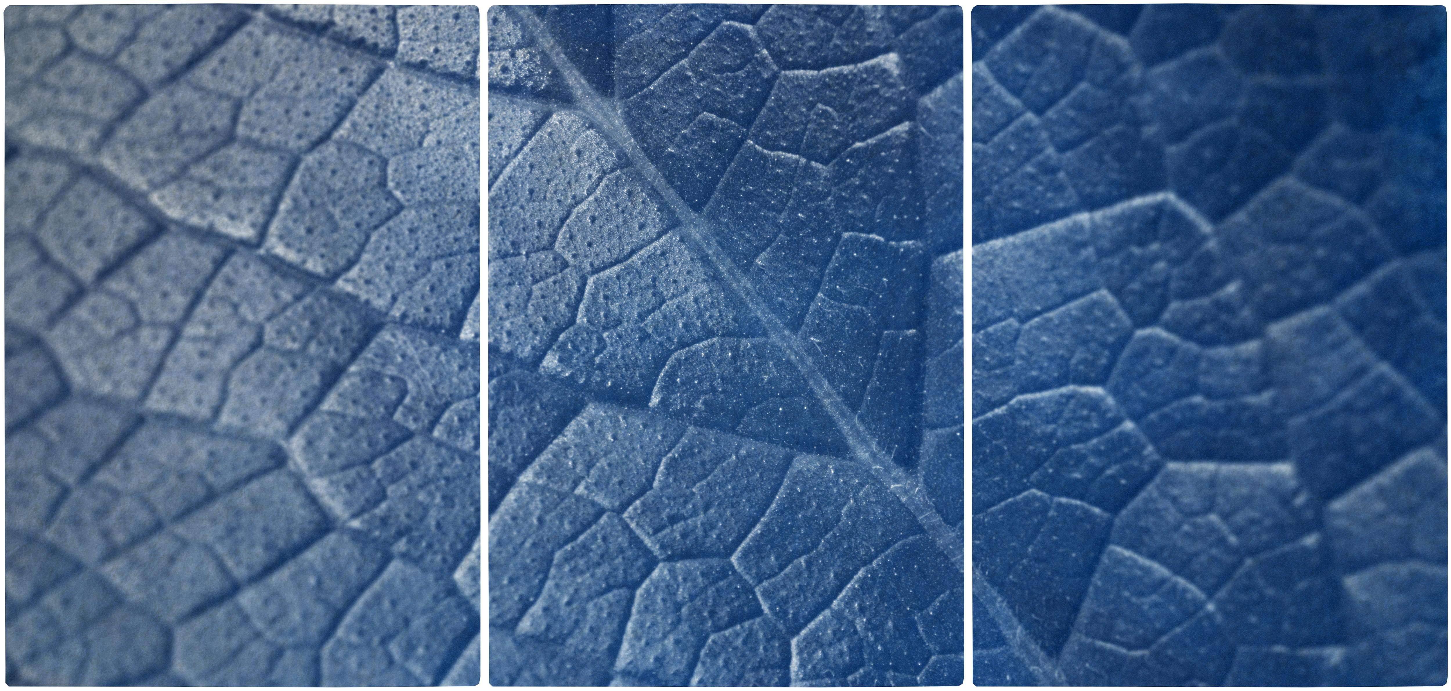 Macro Leaf Triptych in Blue Tones, Cyanotype Print Multi Panels, Botanical Art