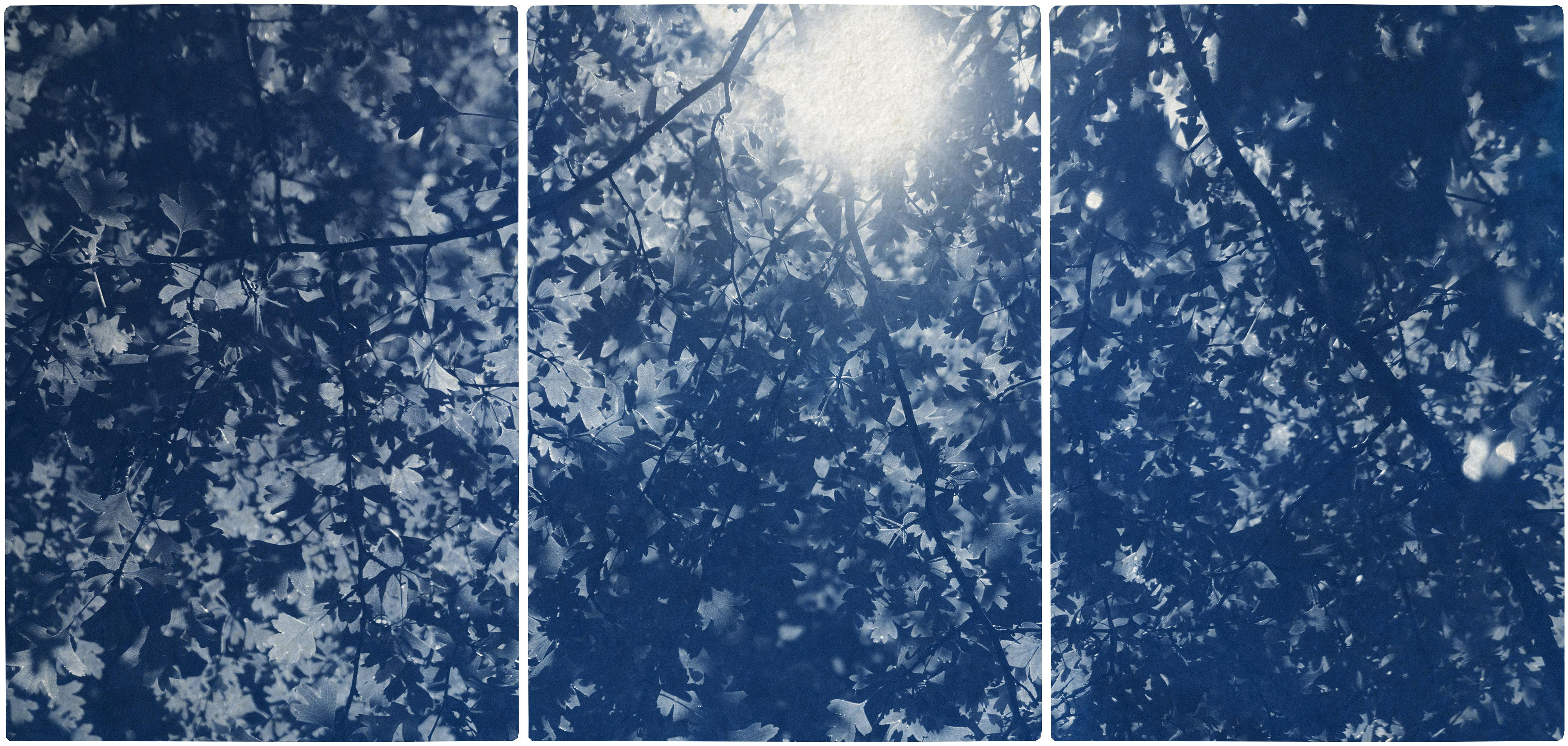 Sunlight Through Forest Branches, Blue Tones Triptych, Botanical Cyanotype Print
