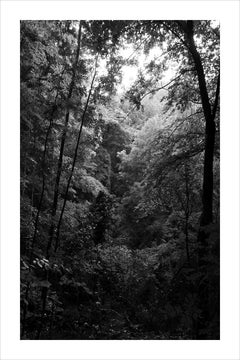 Late Afternoon Forest Light, Large Black and White Landscape Giclée Print, 2021