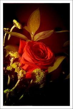Red Rose in Vintage Light, Limited Edition Giclée Print, Vertical Still Life