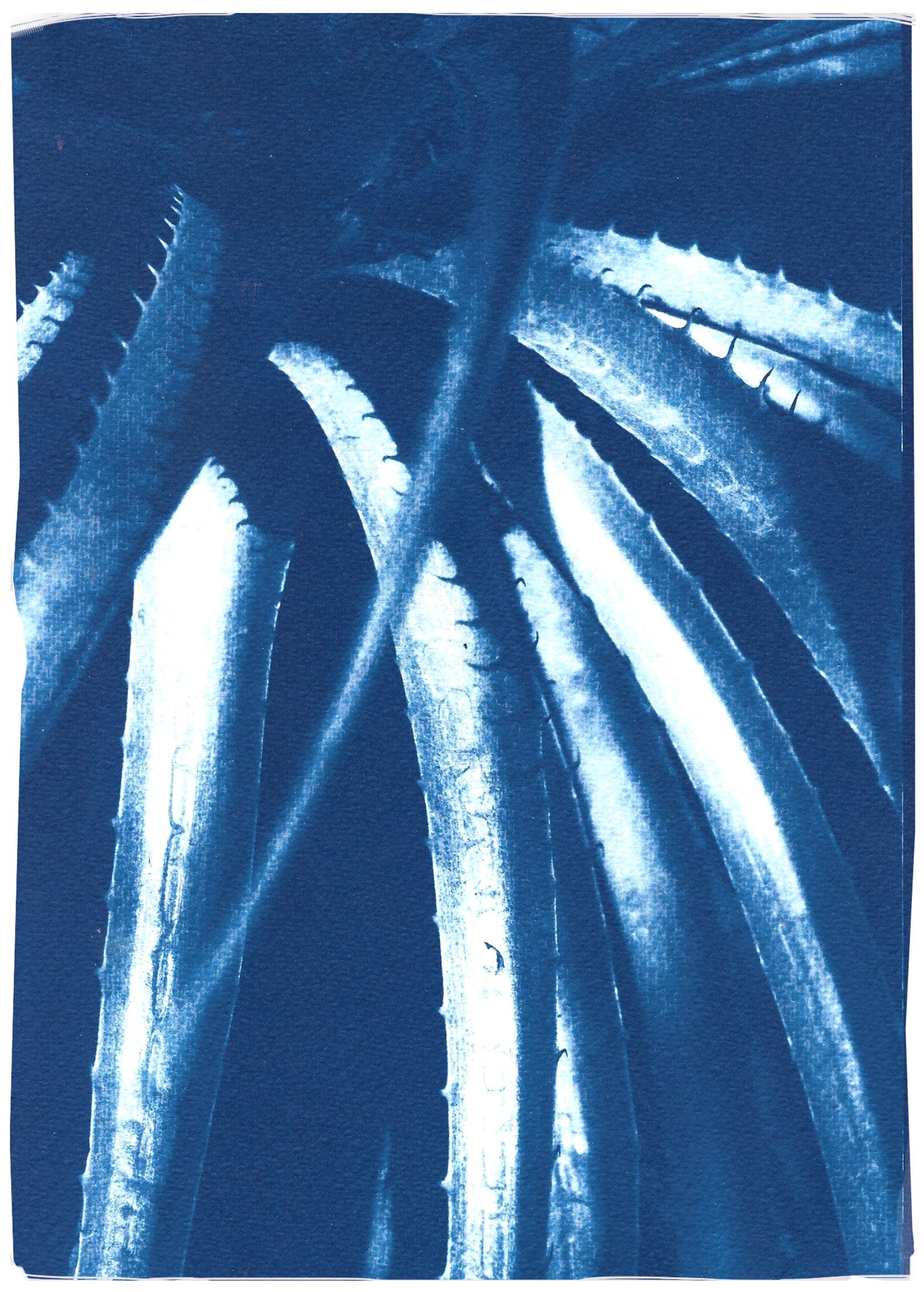 Blue Tones Jurassic Aloe Leaves, Botanical Cyanotype on Paper, Close Up Plants