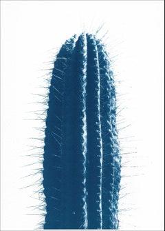 Blue Upright Desert Cactus, Extra Large Cyanotype Print in ColdTones, Botanic